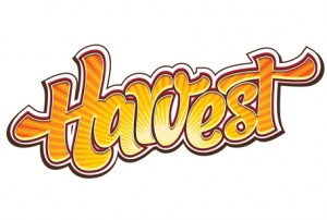 Harvest Festival – call for applications