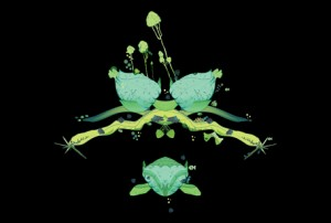 Profile – Greenpeace studio