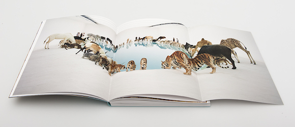 Cai Guo-Qiang: Falling Back to Earth Exhibition publication