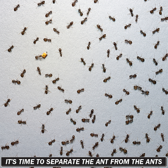 Seperate Ants