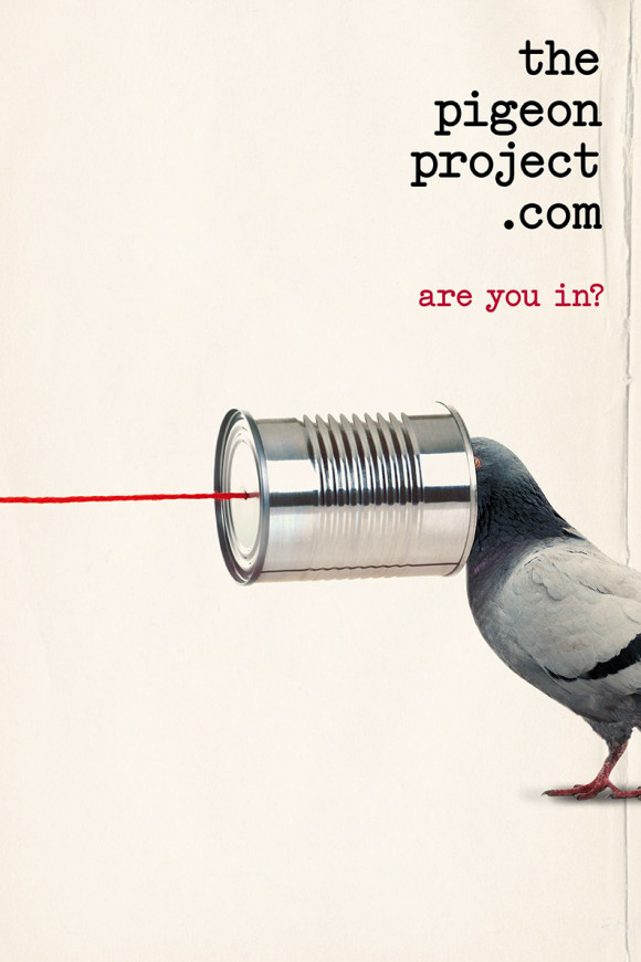 PigeonProject-LR-5